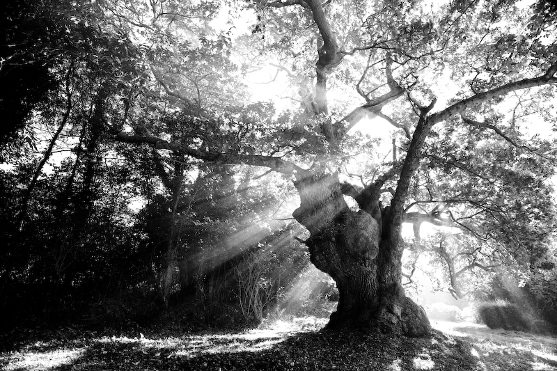 vbrod-arbremagique-9764